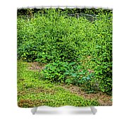 Tomatoes In Garden 2906t Shower Curtain