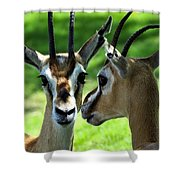 Tommy Talk Shower Curtain by David Lee Thompson