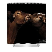 Toned Down Bovine Affection Shower Curtain