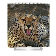 Tongue And Cheek Cheetah Shower Curtain