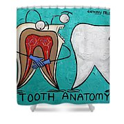 Tooth Anatomy Shower Curtain