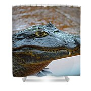 Toothy Gator Shower Curtain