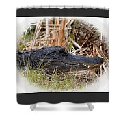 Alligator Toothy Grin 2 Shower Curtain