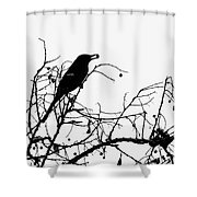 Top Bird Shower Curtain
