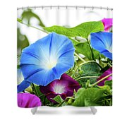 Top Of The Morning Glories Shower Curtain