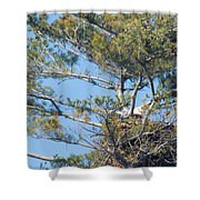 Top Of The Pine Shower Curtain