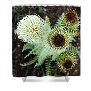 Top Thistle  Shower Curtain