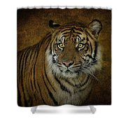 Topaz Tiger  Shower Curtain