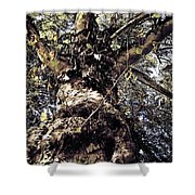 Topiary Shower Curtain