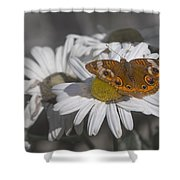 Topsail Butterfly Shower Curtain