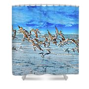 Topsail Skimmers Shower Curtain