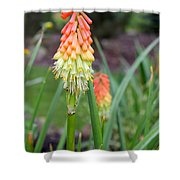 Torch Lily Flower Shower Curtain