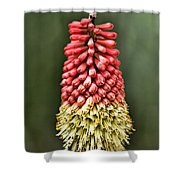 Torch Lily Shower Curtain