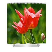 Toronto Tulip Shower Curtain