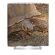 Tortoise Eating Lunch In Living Desert Zoo And Gardens In Palm Desert-california  Shower Curtain