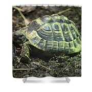 Tortoise Photobomb Shower Curtain