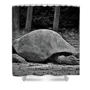 Tortoise Relaxing Shower Curtain