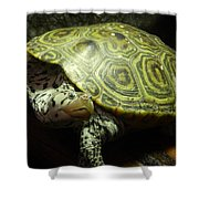 Turtle With A Tale To Tell Shower Curtain