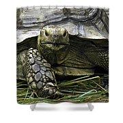 Tortoise's Stare Shower Curtain
