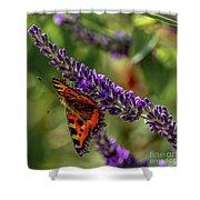 Tortoiseshell Butterfly On Lavender Shower Curtain
