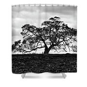 Tortue Oak Shower Curtain