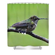 Totally Wet But Beautiful - Ruby-throated Hummingbird Shower Curtain