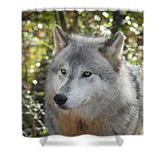 Totem, No. 28 Shower Curtain