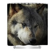 Totem, No. 3 Shower Curtain