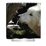 Totem, No. 37 Shower Curtain