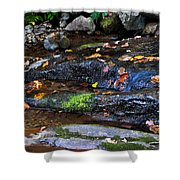 Touch Of Fall Shower Curtain