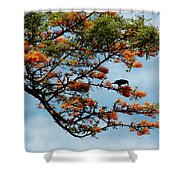 Touch Of Orange Shower Curtain
