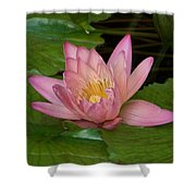 Touch Of Pink Shower Curtain by Karen Wiles
