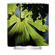 Toward The Secret Garden Shower Curtain