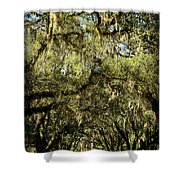 Towering Canopy Shower Curtain