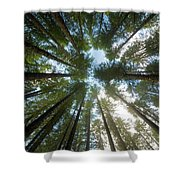 Towering Fir Trees In Oregon Forest State Park Shower Curtain