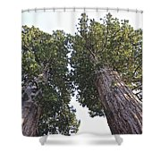 Towering Giants Shower Curtain
