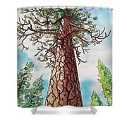 Towering Ponderosa Pine Shower Curtain