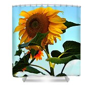 Towering Sunflower Shower Curtain