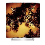 Towering Trees In The Twilight Shower Curtain