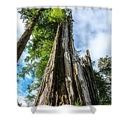 Towering Trees Shower Curtain