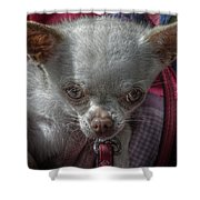 Toy Dog 1 Shower Curtain