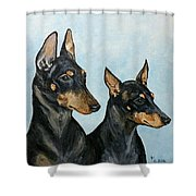 Toy Manchester Terriers Shower Curtain