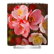 Toyo-nishiki Quince Blooms Shower Curtain