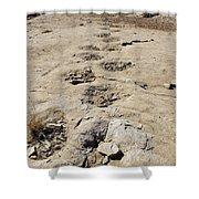 Tracks In The Desert 6 Shower Curtain