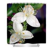 Tradescantia Flower Shower Curtain