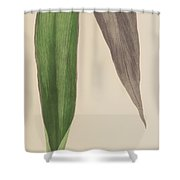 Tradescantia Odoratissima Shower Curtain