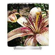 Traditional Art Lily Flowers Floral Garden Baslee Troutman Shower Curtain