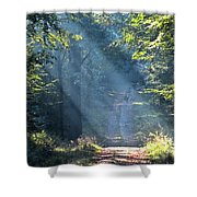 Trail In Morning Light Shower Curtain