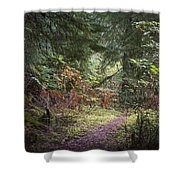Trail In The Forest Shower Curtain