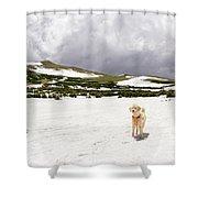Traildog At Kingston Peak Snow Field Shower Curtain